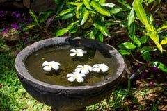 Steinschüssel mit Wasser und Blumen Stockbild