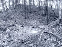 Steinscheiterhaufen versteckte Wasserfall-Spur, Belfast NY Schwarzweiss stockbilder