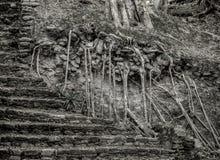Steinschritte forderten durch den Dschungel in Mayaruinen Dzibanche in Mexiko zurück lizenzfreies stockbild