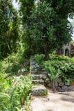 Steinschritte im Dschungel Lizenzfreies Stockfoto