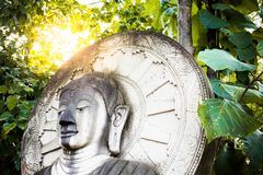 Steinstatue des Kopfes Buddha mit grünem Urlaub und Sonne erweitern sich, thailändisch Lizenzfreie Stockfotos