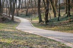 Steinstraße unter den Bäumen im Park Striysky in Lemberg, Ukraine Lizenzfreies Stockfoto