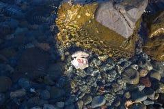 Steinstrand des Meeres Shell unter Wasser Lizenzfreie Stockfotos