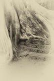 Steinterrasse versenkt durch enormen Baum Lizenzfreie Stockfotografie