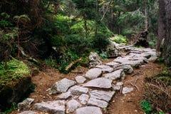 Steintrekkingsweg in Studena-dolina, Tatra-Berge, Slowakei Lizenzfreie Stockbilder