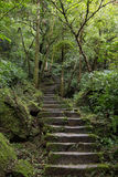 Steintreppe in einem Stoff und in einem fruchtbaren Wald Stockfotos