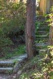 Steintreppe im Wald Lizenzfreie Stockfotografie