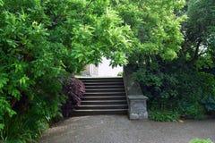 Steintreppe mit überhängenden Bäumen Lizenzfreie Stockbilder
