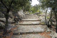 Steintreppen in einem Wald Stockbilder