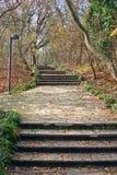 Steintreppen im Wald Stockfotos