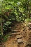 Steintreppenhaus auf Fußweg im Busch Stockbild