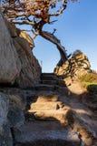 Steintreppenweise zum Himmel mit Felsenwand und zum Baum am Punkt Lobos lizenzfreie stockfotografie