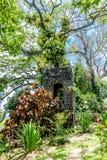 Steinturm auf Hügel im Dschungel Stockfotografie