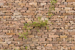 Steinwände, Anlagen lizenzfreies stockfoto