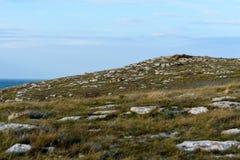 Steinwüste mit seltener Vegetation lizenzfreies stockfoto