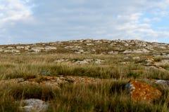 Steinwüste mit seltener Vegetation stockfotos