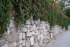 Steinwand abgedeckt mit Blättern Lizenzfreie Stockbilder