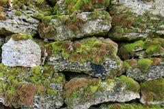 Steinwand bedeckt mit Moos Stockbilder