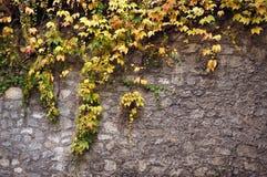 Steinwand bedeckt mit Rebbeschaffenheit Lizenzfreies Stockfoto