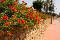 Steinwand, Blume in der Straße Stockfotografie