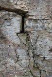 Steinwand des Felsens mit Sprüngen Stockfotos