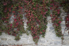 Steinwand, Herbst Lizenzfreies Stockbild