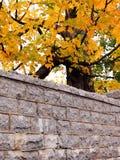 Steinwand-Herbstblätter lizenzfreie stockfotos