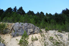 Steinwand im Kiefernwald schaukelt in den Wald Lizenzfreies Stockfoto