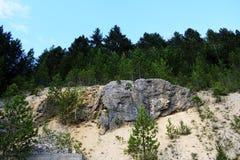 Steinwand im Kiefernwald schaukelt in den Wald Lizenzfreie Stockfotos