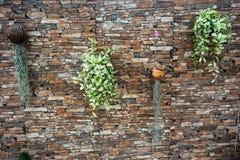 Steinwand mit Anlagen lizenzfreie stockfotos