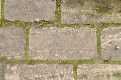 Steinwand mit dem Grün Grün lässt Muster Stockbilder