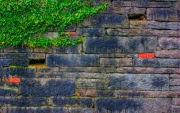 Steinwand mit Efeu Stockbild