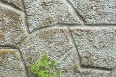 Steinwand mit einem jungen Gras im Frühjahr Stockfotos