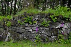 Steinwand mit Fingerhüte (Disambigusierung) dartmoor Lizenzfreie Stockfotos