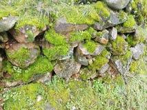 Steinwand mit grünem Moos und Natürlichkeit stockbild