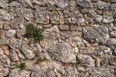 Steinwand mit Grünpflanze Stockbild