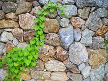 Steinwand mit Gras stockfoto