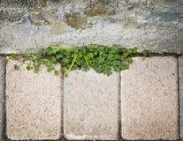 Steinwand mit Gras Stockbild
