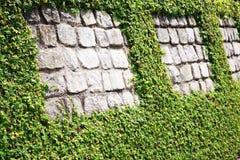 Steinwand mit Hecke lizenzfreies stockbild