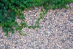 Steinwandbeschaffenheit mit grünen Blättern stockbilder