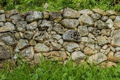 Steinwandbeschaffenheit mit Moos und grünem Gras Lizenzfreies Stockfoto