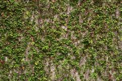 Steinwandhintergrund im Vordergrundgras Stockbild