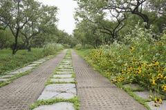 Steinweg im Park Stockfotos
