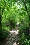 Steinweg im Wald Lizenzfreie Stockfotos