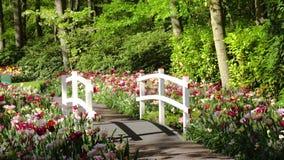 Steinwegmethode im Garten stock video