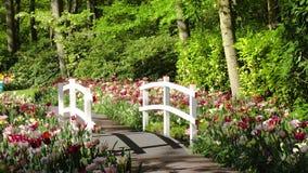 Steinwegmethode im Garten stock video footage