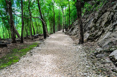 Steinweise im Wald Stockfotos