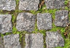 Steinziegelsteine mit Gras und Moos Stockfotos