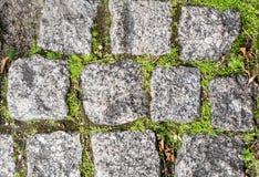 Steinziegelsteine mit Gras und Moos Lizenzfreies Stockfoto