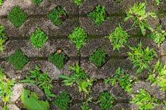 Steinziegelsteine mit Gras und Moos Hintergrund, Beschaffenheit lizenzfreies stockfoto
